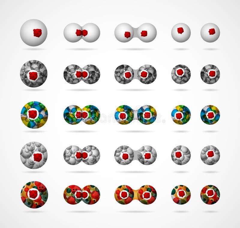 celluppdelning vektor illustrationer