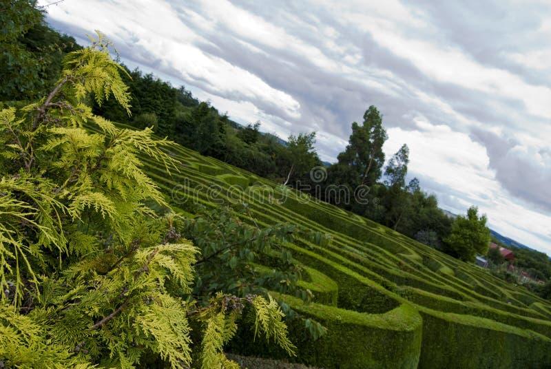 Celtic maze in Wicklow, Ireland. stock image