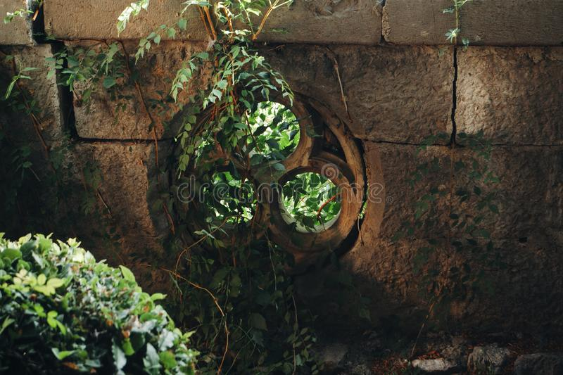 Celtic trefoil of stone in the fence, entwined with ivy. stock photos