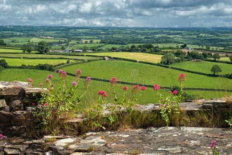 Flowers at Launceston Castle. Cornwall UK royalty free stock image