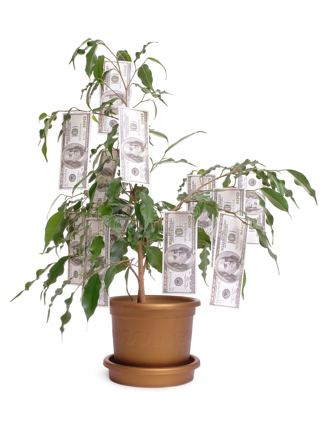 Cem árvores do dólar imagem de stock royalty free