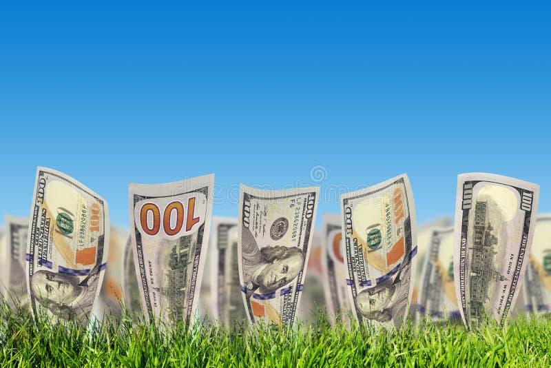 Cem cédulas do dólar que crescem da grama Dinheiro fotografia de stock royalty free