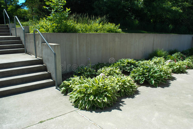 Cement steps and walkway. With hostas stock photography