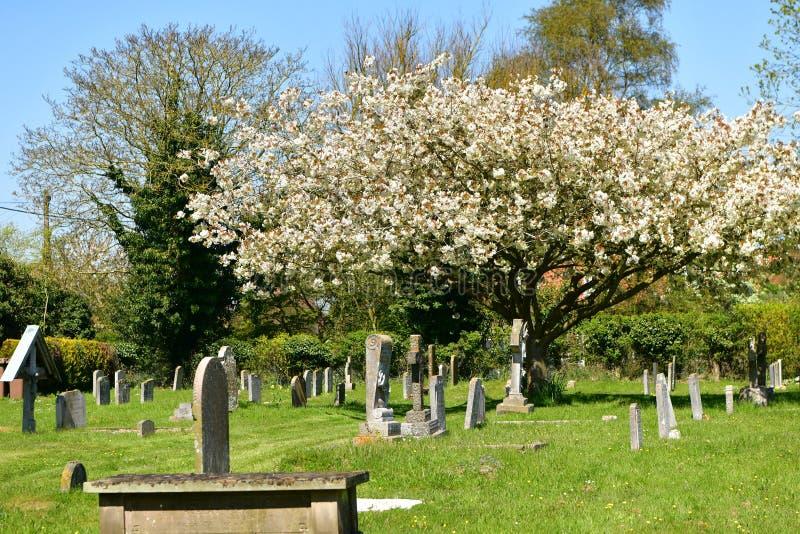 Cementary kyrka St Andrew, Walberswick UK, fotografering för bildbyråer