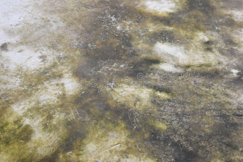 Cemente la retención del agua del área que causa el musgo, molde, hongo foto de archivo libre de regalías