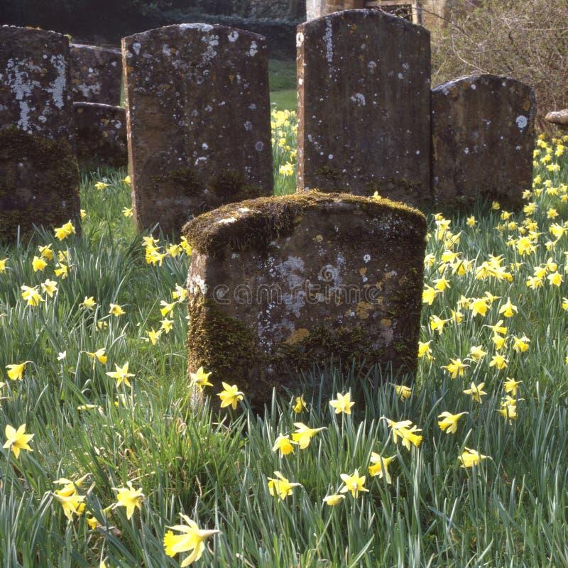 Cementerio con los narcisos imagen de archivo libre de regalías