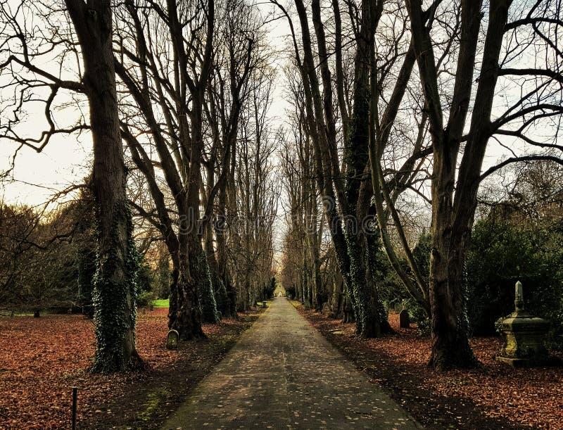 Cementerio de la trayectoria de la calzada salvaje fotos de archivo libres de regalías