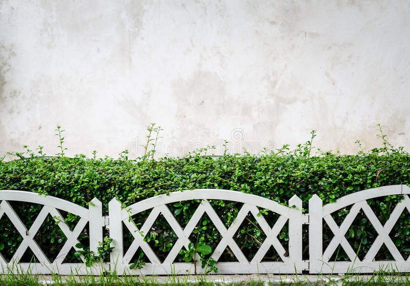 Cementowa ściana z rośliny tłem zdjęcia stock