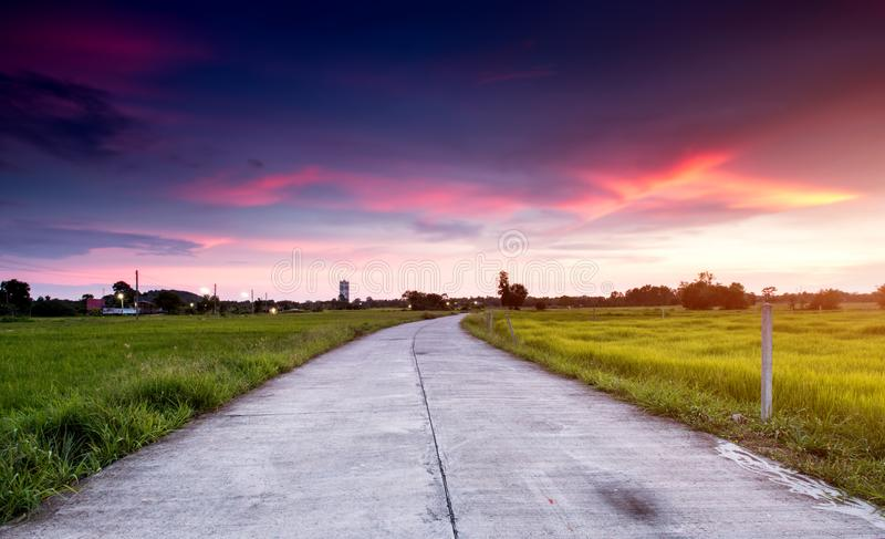 Cementväg i det gröna fältet på landssidan arkivfoton