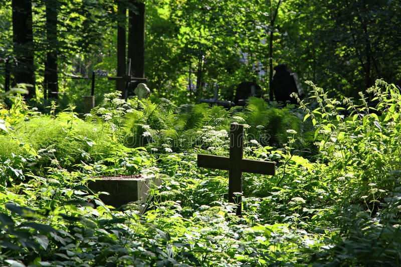 In the cemetery. royalty free stock image