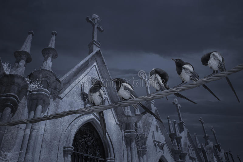 Cemetery bunch of magpies royalty free stock images