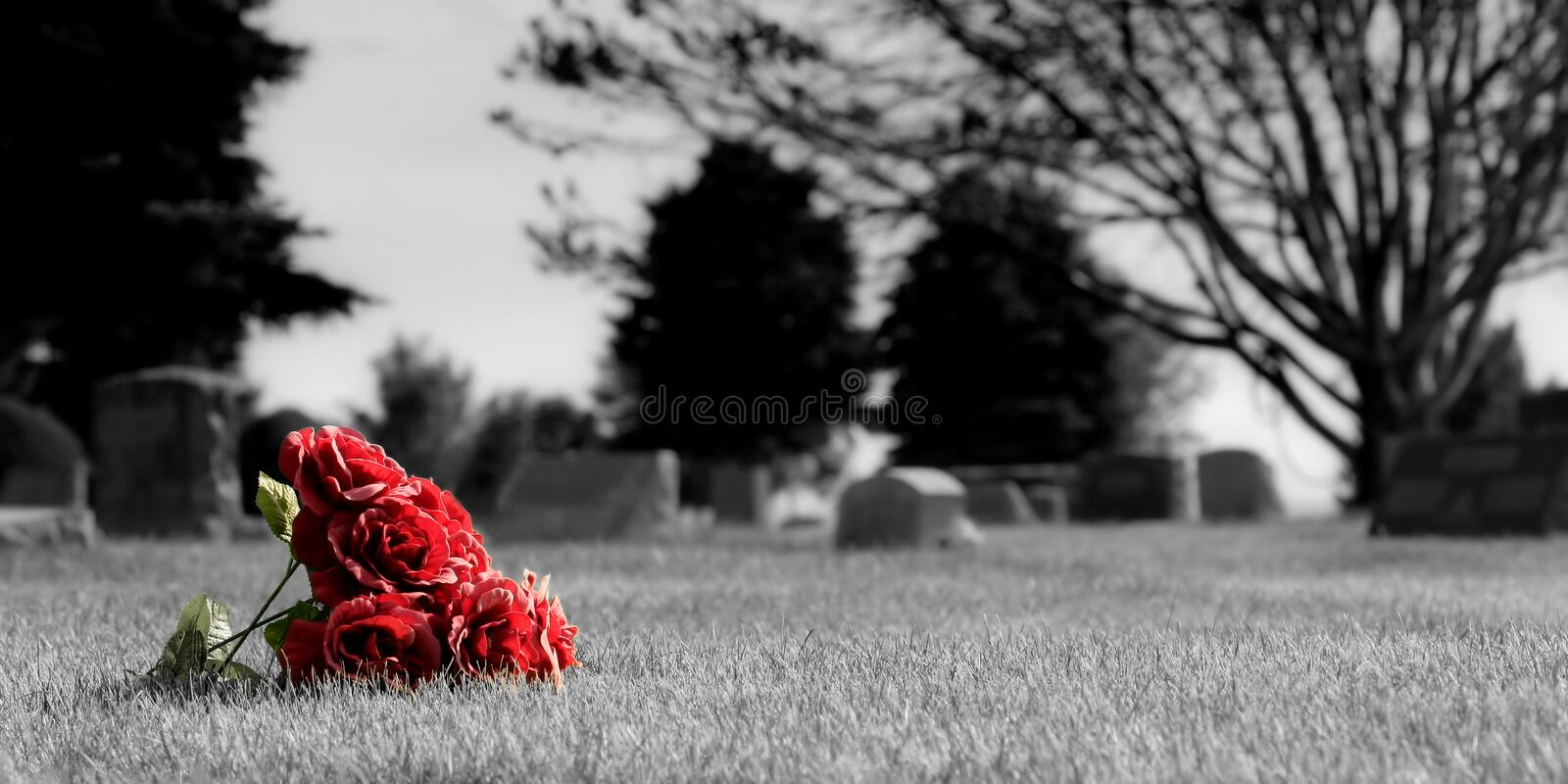 Cemetery flowers. A small bouquet of roses, lost in the grass at a cemetery. aspect ratio is 2:1. desatured background to enhance the mood and bring out the royalty free stock image