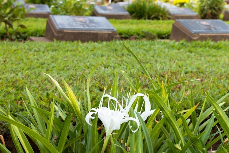 Cemetery In Kanchanaburi, Thailand Stock Photo