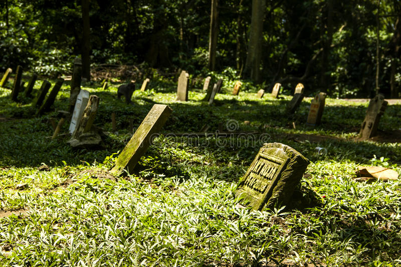 Download Cemetery in Monkey Forest stock image. Image of grass - 25375917