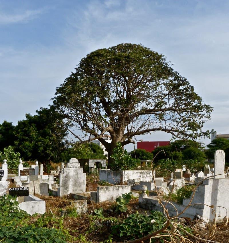 Cemitério africano com árvore grande foto de stock