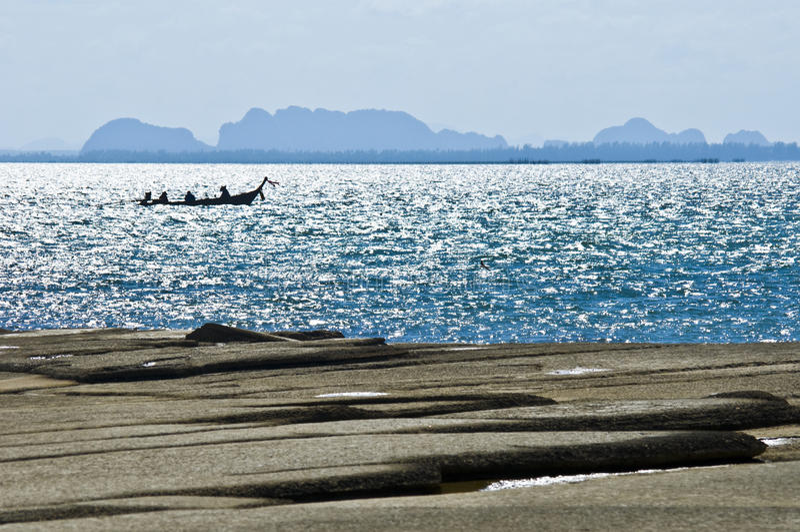 Cemitério fóssil da praia do escudo de Susan Hoi fotos de stock royalty free