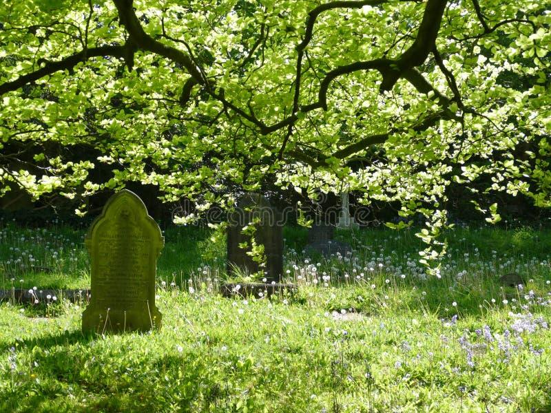 Cemitério na luz verde com árvores e folhas fotografia de stock