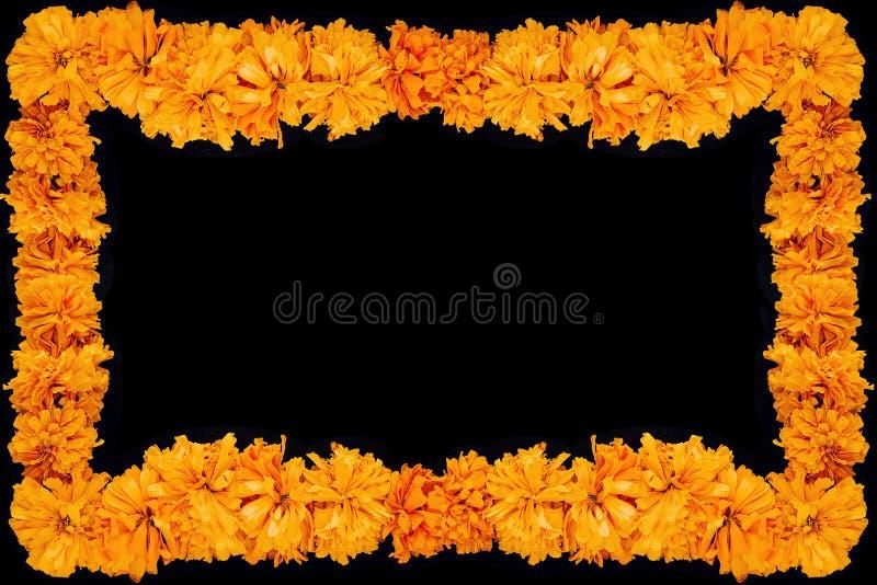 Cempasuchil-Blumenrahmen, mexikanische Blume des Tages der Toten in Mexiko stockfotos