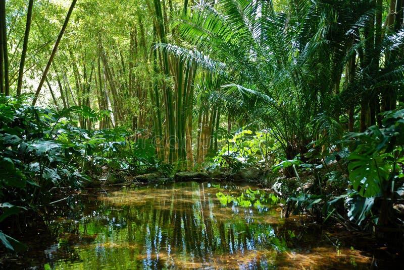 Cenário 2 da selva fotografia de stock