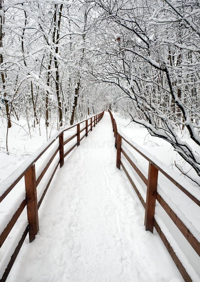Cenário bonito com um trajeto coberto de neve com a cerca de madeira na floresta entre as árvores após uma queda de neve em um di imagem de stock