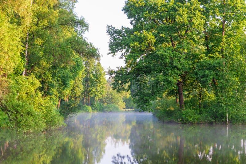 Cenário bonito da floresta do lago imagens de stock royalty free