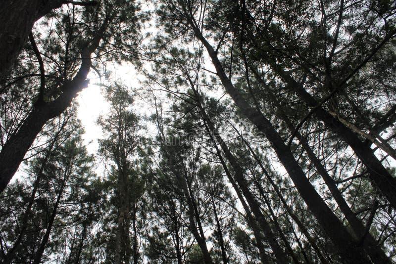 Cenário bonito da floresta do pinho fotos de stock royalty free