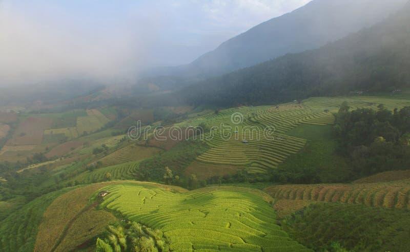 Cenário bonito do campo do arroz da etapa, Tailândia imagens de stock