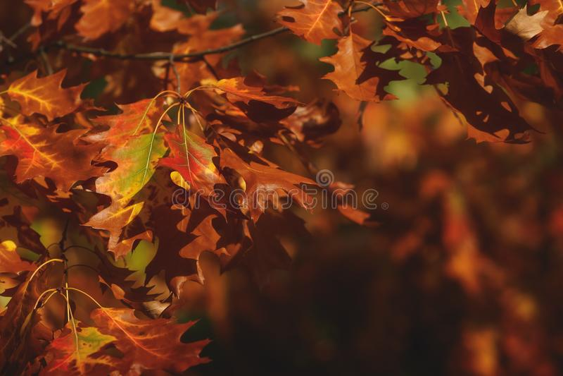 Cenário bonito do parque do outono, detalhes imagem de stock
