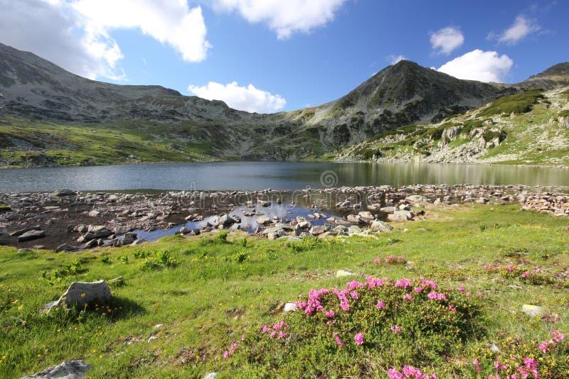 Cenário bonito do verão das montanhas Carpathian foto de stock royalty free