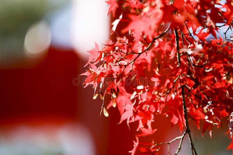 Cenário colorido da paisagem da estação de curso do turismo do outono das folhas em Osaka e em Kyoto Japão imagens de stock