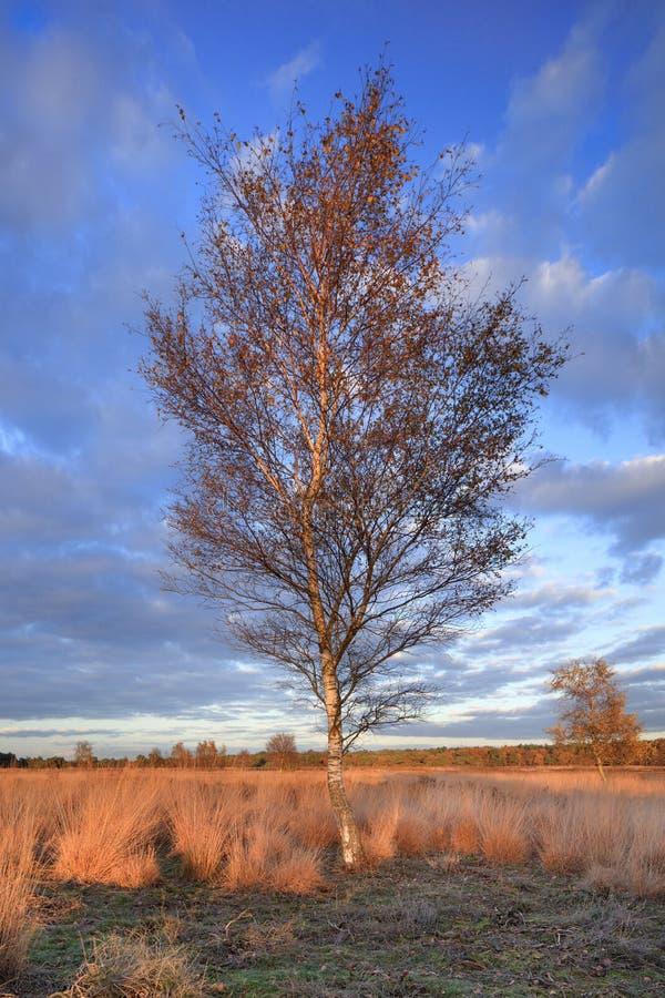 Cenário crepuscular em um charneca tranquilo, Goirle do outono, Países Baixos imagem de stock