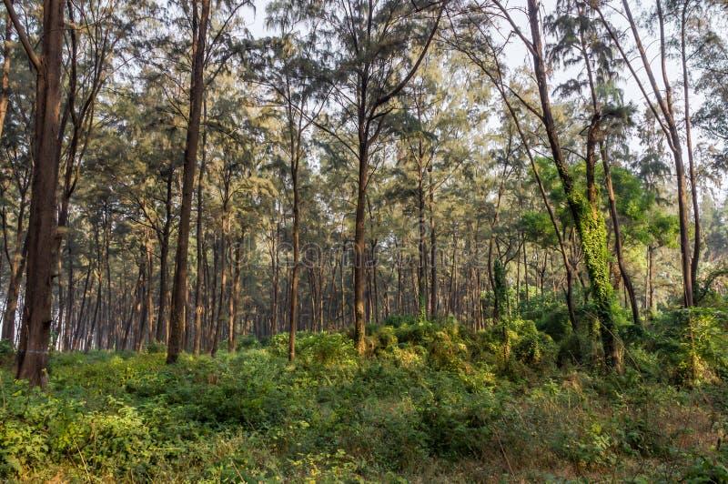 Cenário da floresta úmida, verão, mola fotos de stock