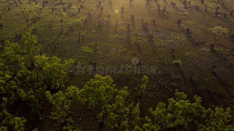 Cenário da floresta do outono com raios da luz morna Floresta de Mistic imagem de stock