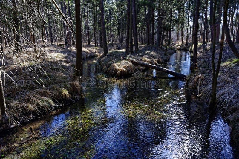 Cenário da floresta ribeirinho na mola adiantada de Lechauen imagens de stock royalty free