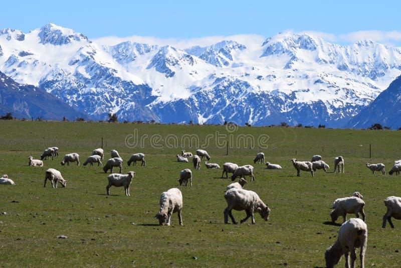 Cenário da montanha de Nova Zelândia fotos de stock