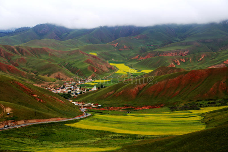 Cenário da montanha de Qinghai Qilian Zhuoer e flores do Cole fotos de stock
