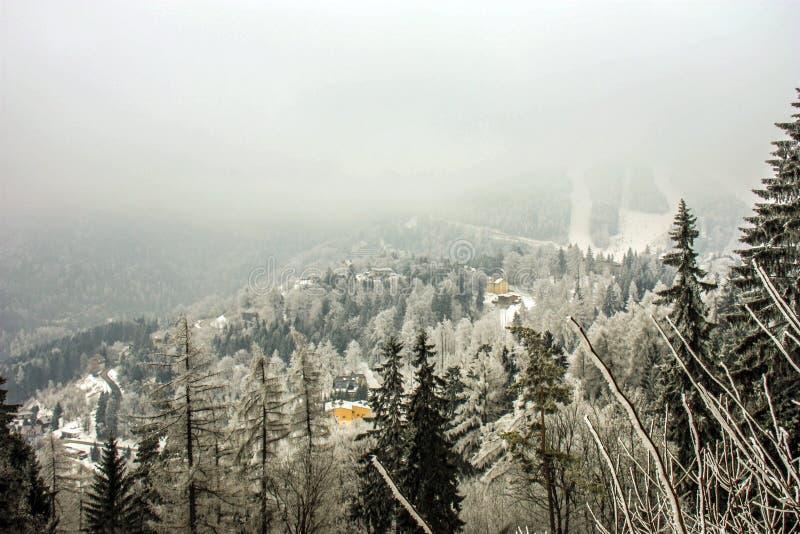 Cenário da montanha do país das maravilhas do inverno com abeto vermelho centenário e pinho nos cumes austríacos Paisagem da mont imagem de stock royalty free