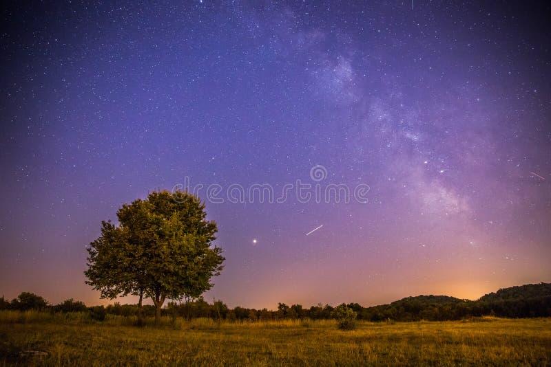 Cenário da noite: Estrelas, prado e uma árvore Tons roxos e mornos imagem de stock