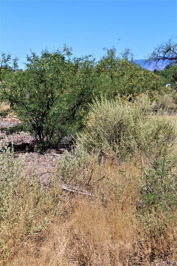 Cenário da paisagem do deserto situado em Cochise County, St David, o Arizona fotografia de stock royalty free