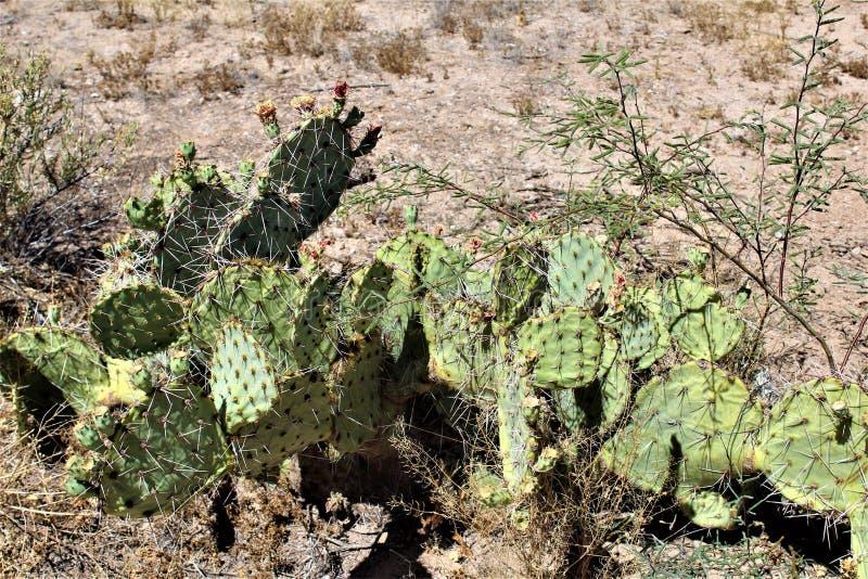 Cenário da paisagem do deserto situado em Cochise County, St David, o Arizona fotografia de stock