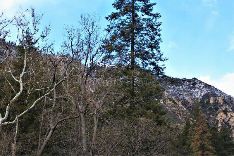 Cenário da paisagem, garganta de Maricopa County, Oak Creek, o Arizona, Estados Unidos fotografia de stock