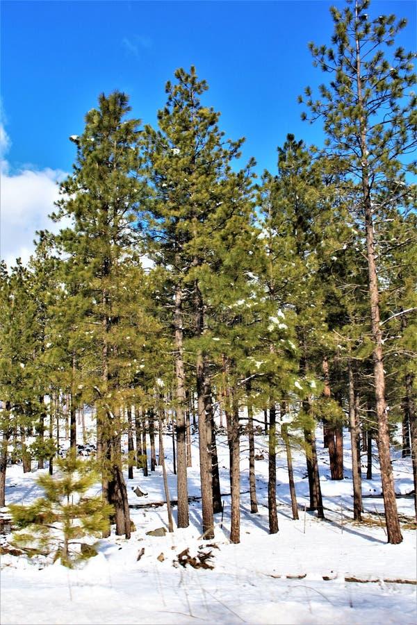 Cenário da paisagem, garganta de Maricopa County, Oak Creek, o Arizona, Estados Unidos fotografia de stock royalty free