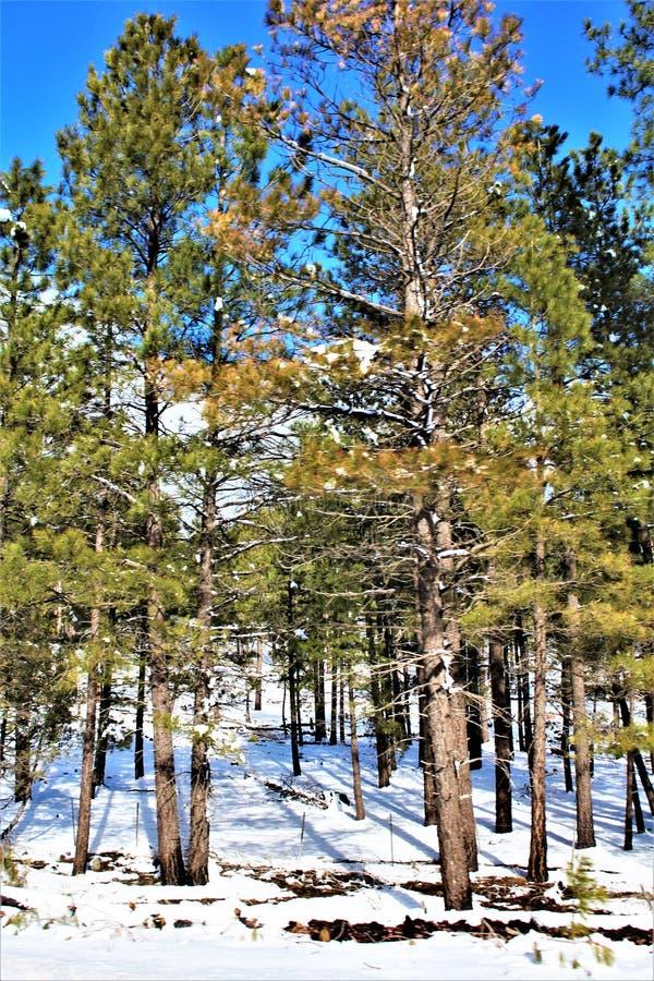 Cenário da paisagem, garganta de Maricopa County, Oak Creek, o Arizona, Estados Unidos imagens de stock royalty free
