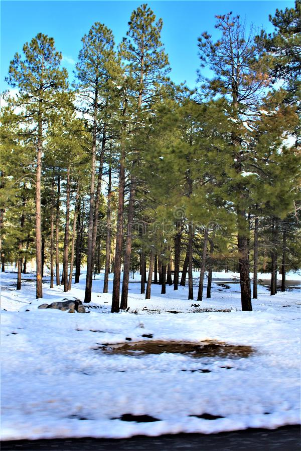 Cenário da paisagem, garganta de Maricopa County, Oak Creek, o Arizona, Estados Unidos fotos de stock royalty free