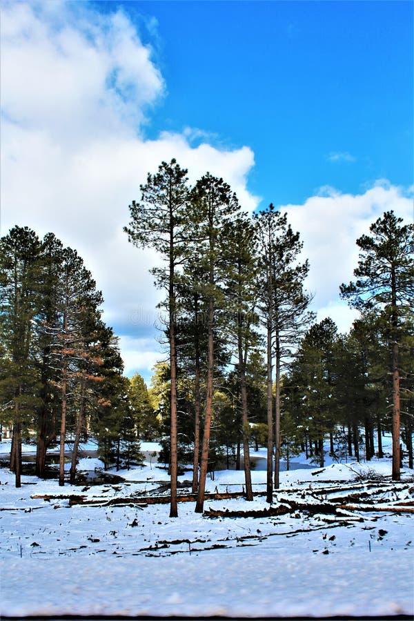 Cenário da paisagem, garganta de Maricopa County, Oak Creek, o Arizona, Estados Unidos imagem de stock