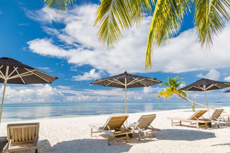 Cenário da praia com vadios e guarda-chuvas sob as folhas das palmas Fundo tropical da praia foto de stock royalty free