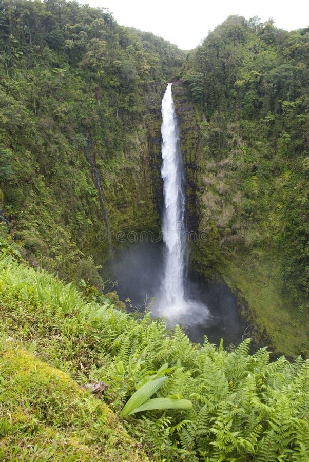 Cenário de Havaí: Akaka cai cachoeira imagem de stock royalty free