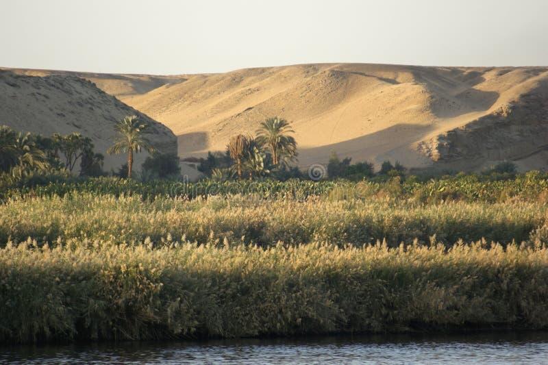 Cenário de Nile do rio no tempo da noite imagem de stock