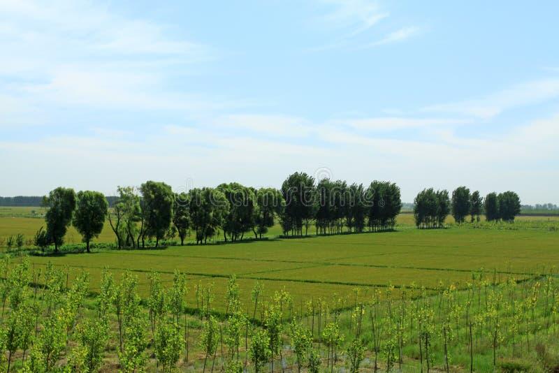 Cenário do campo em China do norte foto de stock