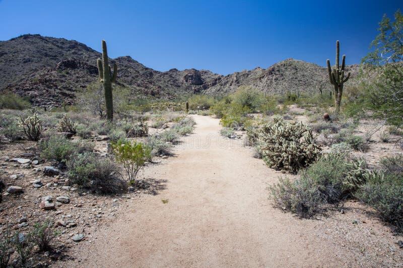 Cenário do deserto do Arizona imagem de stock royalty free